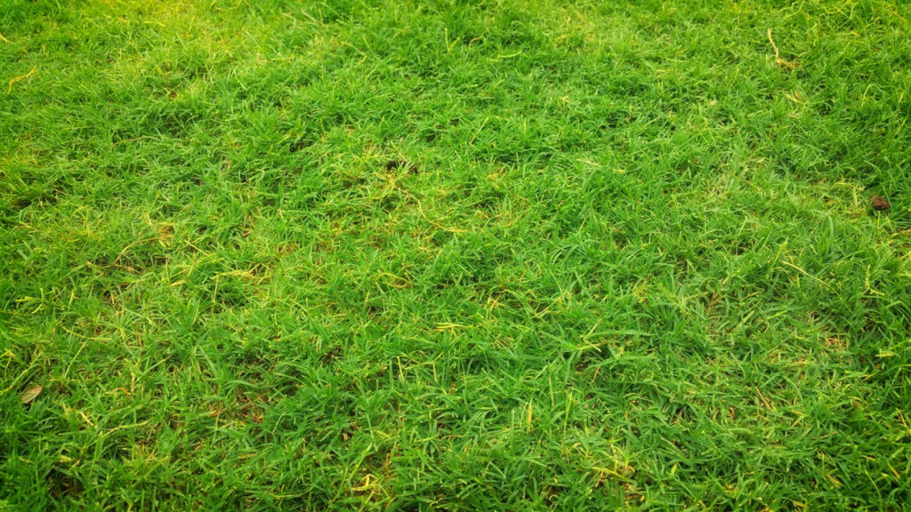 Artificial turf in Sydney
