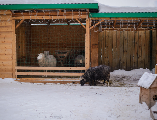 What Are Custom Sheep Yards?